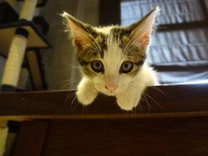 ひゅうがです!お耳が大きい? (そう見えるだけ??)