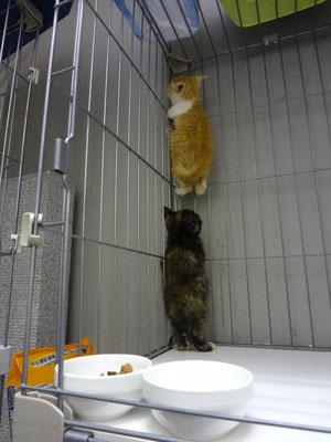 最強ビビリで、初日は隔離室に入る度に、こんなでした(笑)