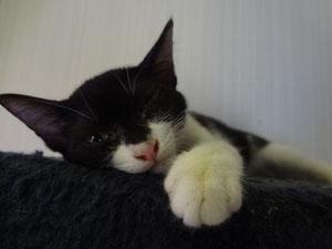 眠くてウルウルおメメ。ジュニアです。(女の子ヨ)
