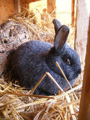 Tavşan Sima'yı hatırlıyor musunuz?