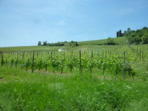 バローロ近郊のブドウ畑