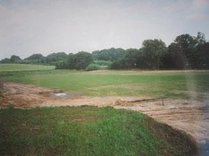 Die Spielfläche hat sich Wochen später in eine grüne Fläche Umgewandelt