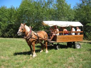 Char western tirée par le cheval