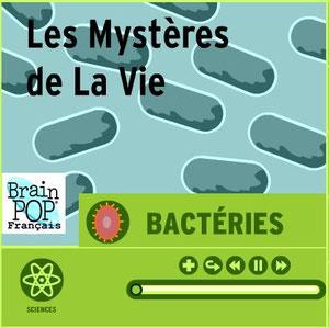 Lien vers une animation sur les bactéries.