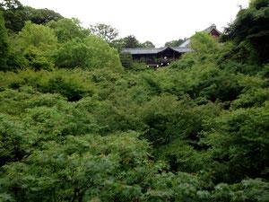 空無一人的東福寺