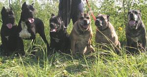 На фото собаки питомника Гранд Дефенс Рус-С