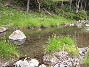 農園のすぐ近くを流れる渓流
