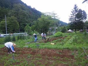 懇親会の後、農作業に(6月30日)