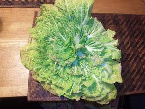 これ「白菜」です。種まきが遅れ葉が丸まらずに年越ししました。しかし、やわらかく実に美味しいのです。素人は時にとんでもない作物を作りますね!(13.1.24撮影)。
