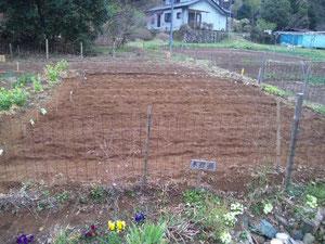 この畑の土の下にはジャガイモの種芋が植えられています(3月27日植え付け撮影)。