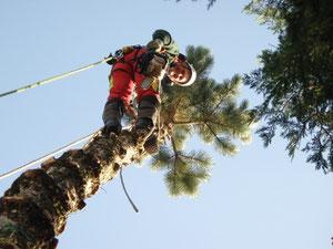 Abtragen von Bäumen mit Steigeisen und SKT