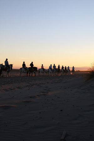 Abrivadoranch: la découverte de la plage de l'Espiguette. Une balade à cheval magnifique, accessible à tous