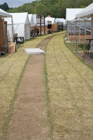 芝生がこんなに!何だかきれい
