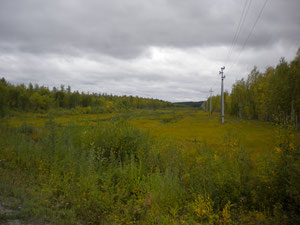 uvat / taiga /  russland 2011