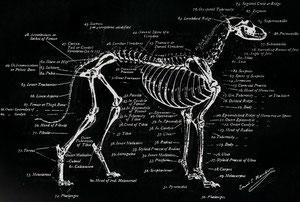 Skelett tafel
