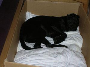 ich schlafe noch immer in meinem Babybettchen...