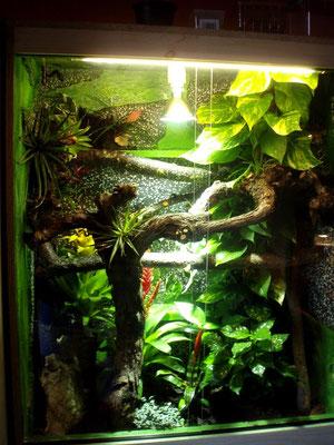 rotkehlanolis reptilien und amphibien. Black Bedroom Furniture Sets. Home Design Ideas