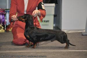 Almaznyi Laretz Tsarskyi Podarok - BISS puppy 3