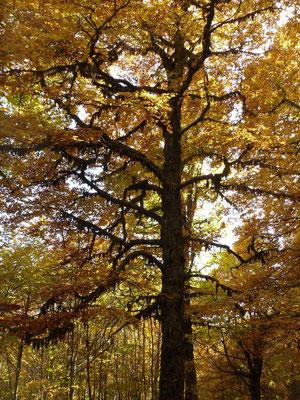 l'autunno.........