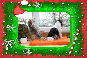 Weihnachtsgrüße von Maria, Nandana und Janosh