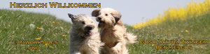 Teamwork Dog Gosdaturas Bentjegos
