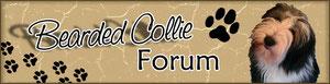 Bearded Collie Forum