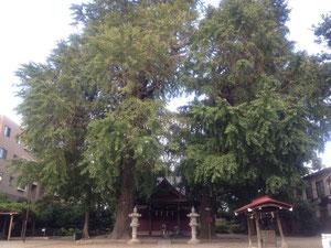 興野神社のイチョウ
