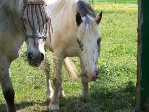 Das sind meine Pferde  Fritz und Sergio