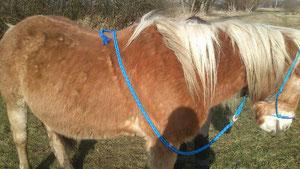 Knotenhalfter blau mit Führstrick