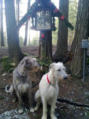 Foto-Shooting beim Wolfskreuz