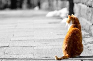猫の画像(後姿)