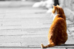 猫の画像(後姿)、切り抜き後