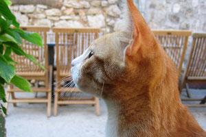 猫の画像(横顔)、切り抜き後