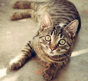 猫の画像(正面)