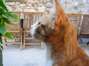 猫の画像(横顔)