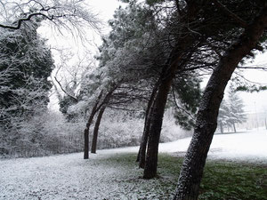 Alberi Parco