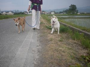 お散歩行ったり!!ろん← →えんたん