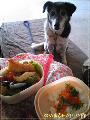 美味しそうなお弁当♪しゅうちゃんから貰っちゃいました!写真!なぜまりちゃんがいるのか?(さんご)