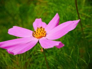 可愛いお花も沢山応援してくれているよ!