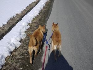 お散歩も仲良く行きます!!