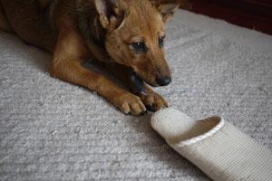 スリッパも確保しながら、別のおもちゃで遊ぶ欲張り君!