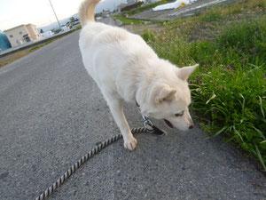 お散歩!お散歩!たのしいにょ~