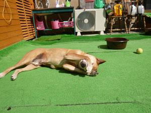 あ~暑い!!byろん