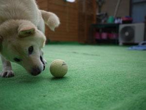ボール遊びも大好きでつ!!