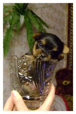 Дуськин щенок-Молли