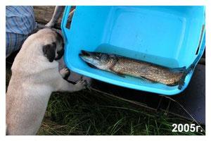 Кнопа на рыбалке