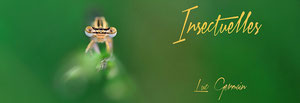 Insectuelles (Loup)