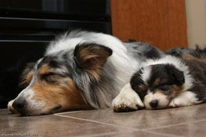 Fuzzy et son bébé