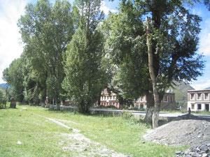ドロノキ並木のチベット街道