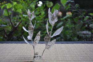 オリーブの剪定した枝より繊維を抽出し、和紙を作り、オリーブの苗木を作ったもの(小豆島にて)